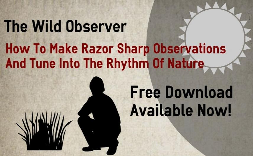 Learn Nature Observation With My   Free Ebook
